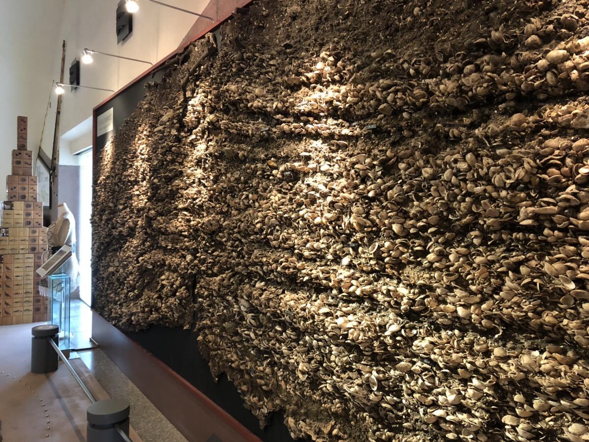 奥松島縄文村歴史資料館|観光スポット|松島観光ナビ