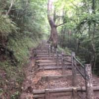 大高森 登山道