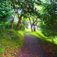 稲ヶ崎公園へ続く林道