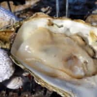 松島 牡蠣