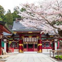 鹽竈神社 桜