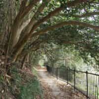 野々島 椿のトンネル